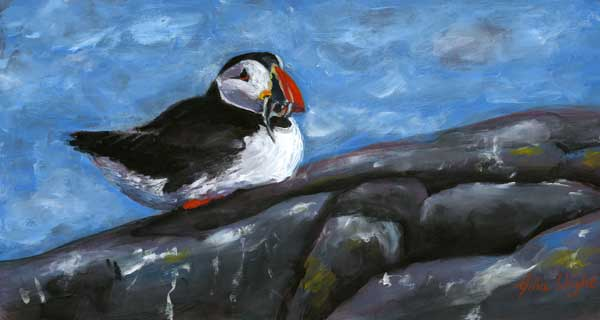Isle Of May Puffin, Gouache